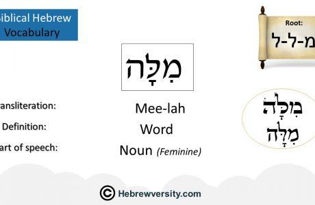 Biblical Hebrew Vocabulary List 20
